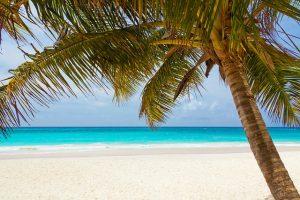 Strand mit Palme
